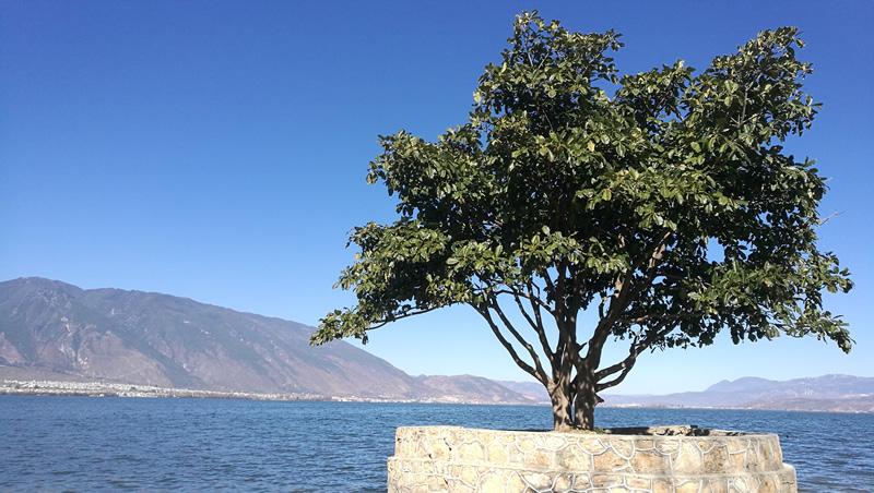 海舌尖的树