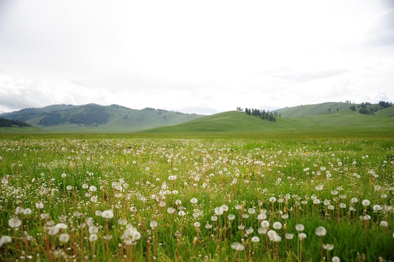图尔盖提草原