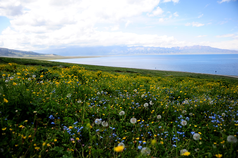 赛里木湖的小花