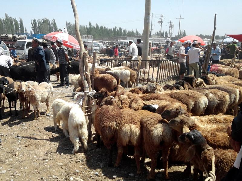 喀什牛羊大巴扎