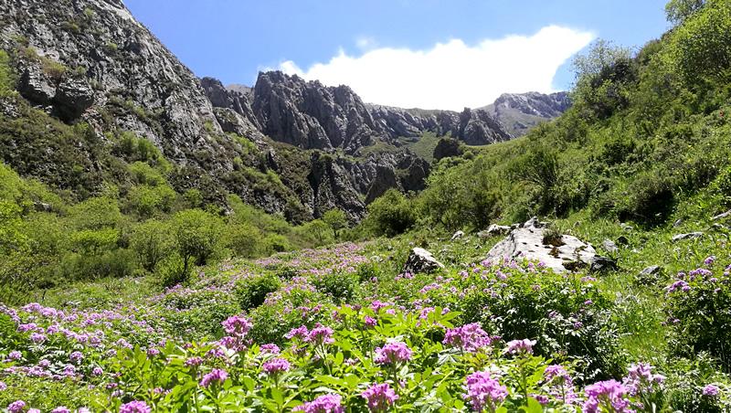 《郎木寺大峡谷》(纳摩大峡谷)鲜花盛开