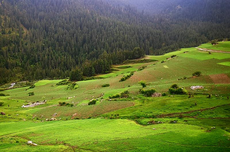 扎尕那森林和田园