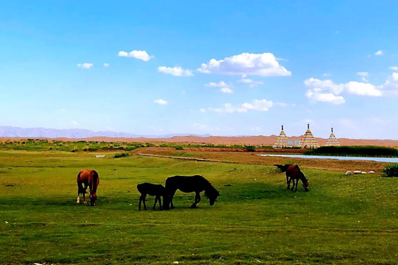 腾格里通湖草原